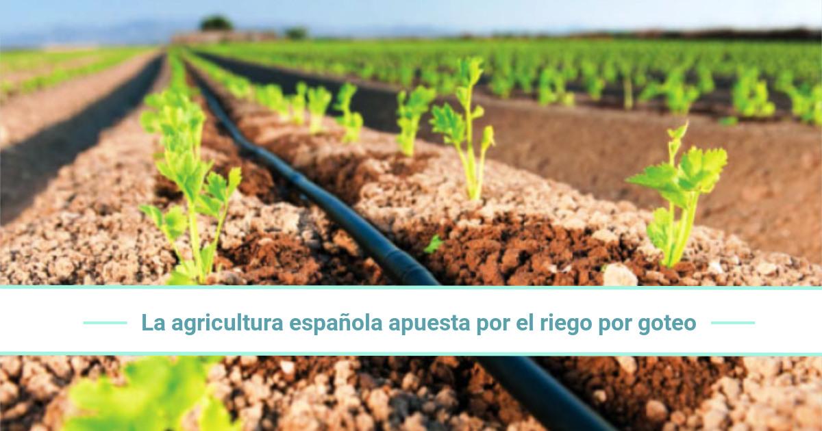 La agricultura española apuesta por el riego por goteo