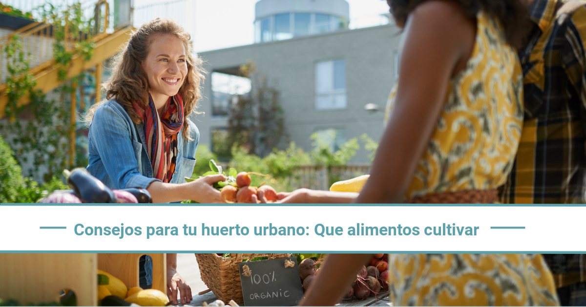 Consejos para tu huerto urbano: cuáles son los mejores alimentos para cultivar