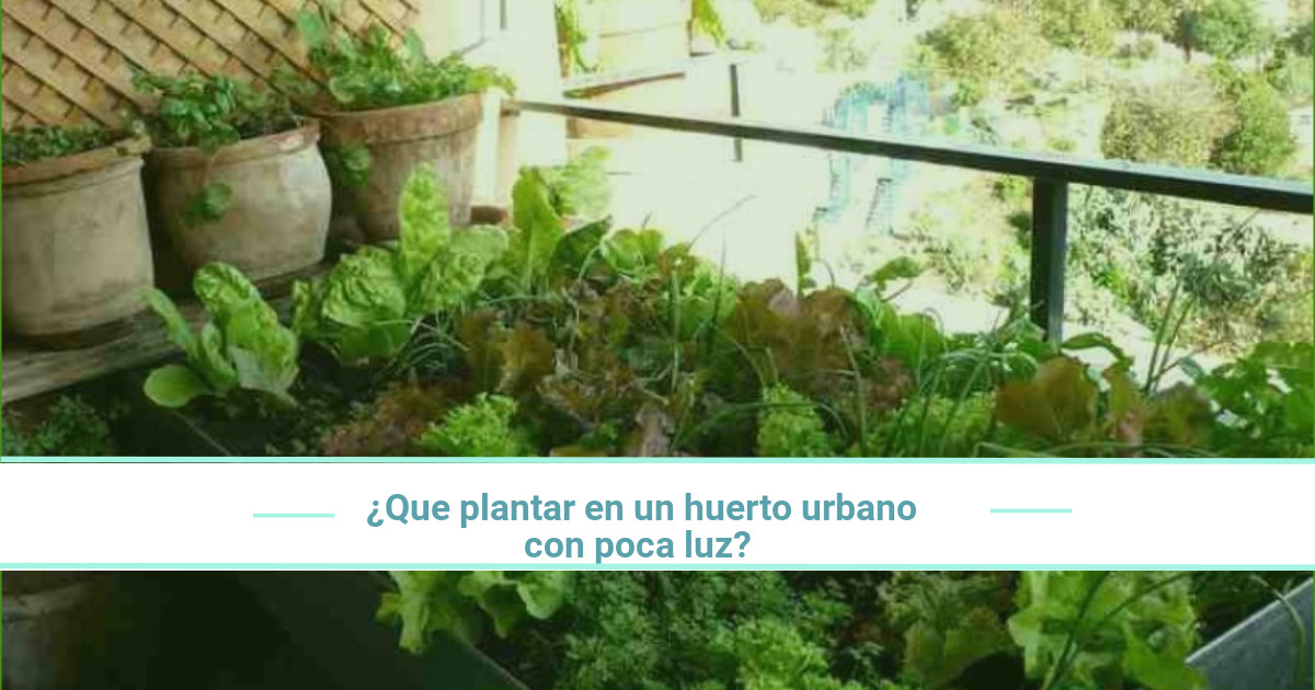 Qué plantar en un huerto urbano con poca luz