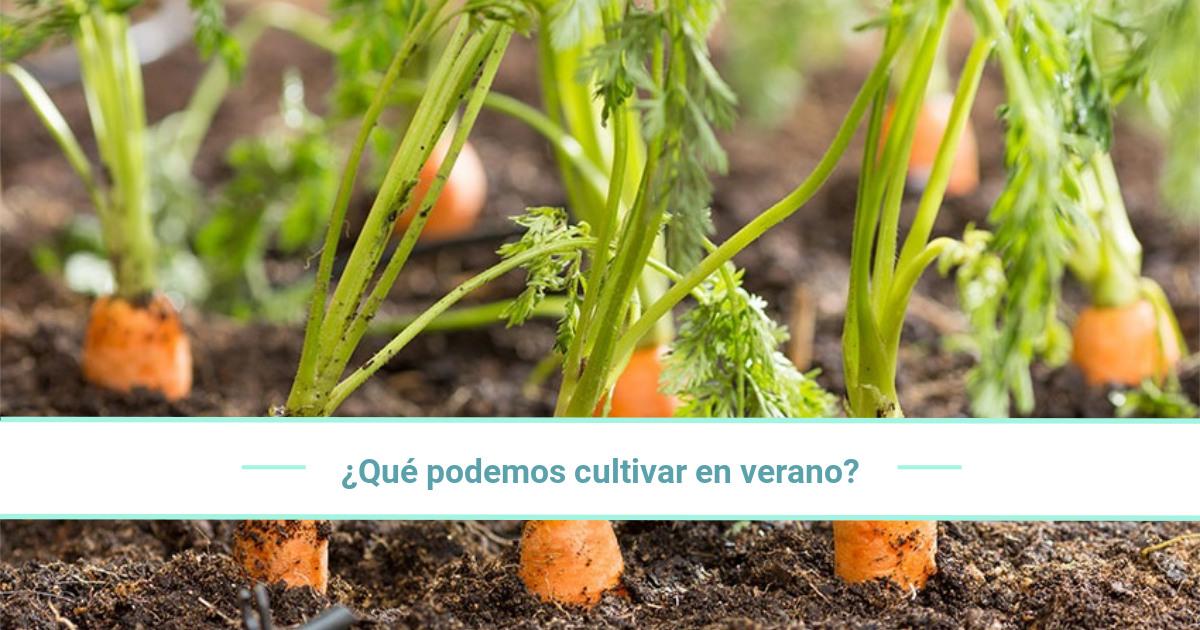 ¿Qué plantaciones merece la pena comenzar a cultivar en verano?