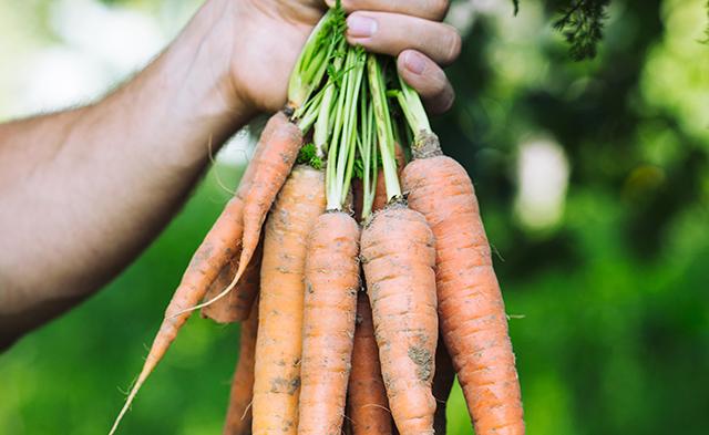 ¿Qué cultivar en verano en tu pequeño huerto?